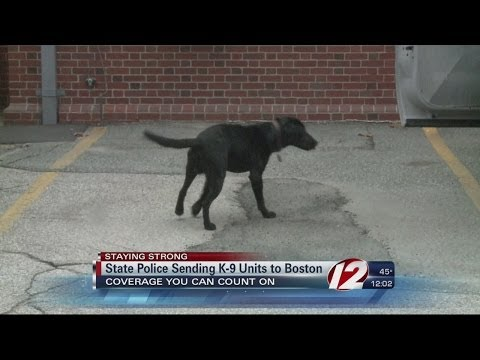 RI police dogs join Boston Marathon security