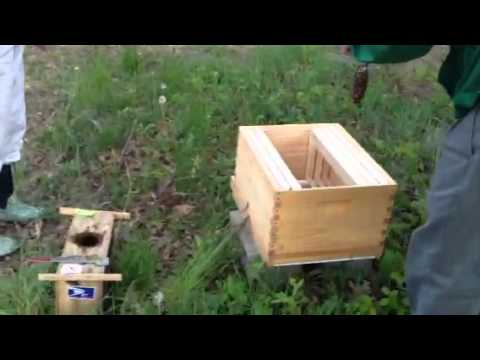 Cape Ann Waldorf School bee installation