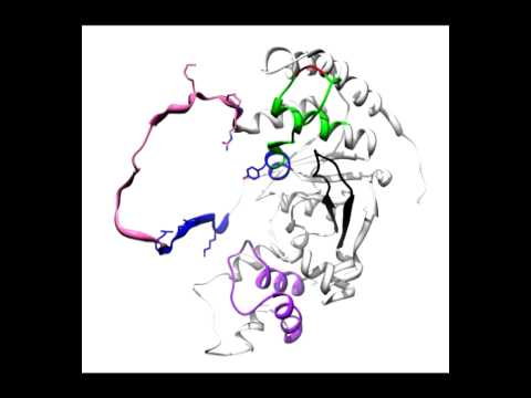 FEN1 protein with and without DNA.mov