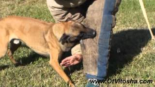 Malinois - The Perfect Style of fight!