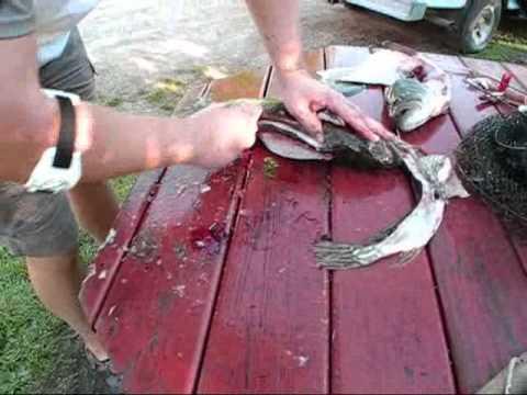как отделить рыбу от костей по Aмерикански