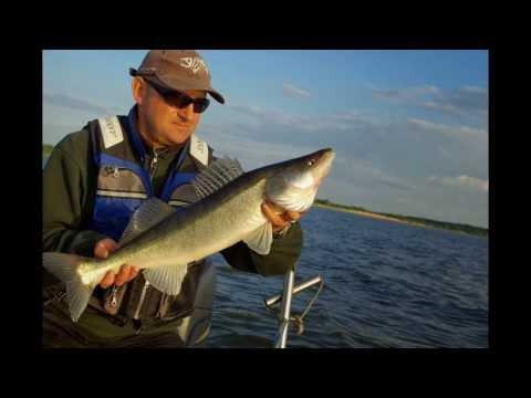 видео ловля судака на финском заливе летом видео