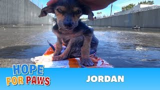 A brave little dog gets rescued from the river. His recovery with Hope For Paws will inspire you.