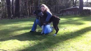 Treinador ressuscita cachorro com parada cardíaca