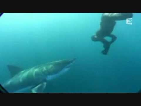 Úszkálás fehércápákkal - Swimming with a Great White Shark