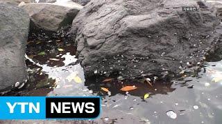 """도쿄 올림픽 비상...""""수질 오염에 경기 취소"""" / YTN"""