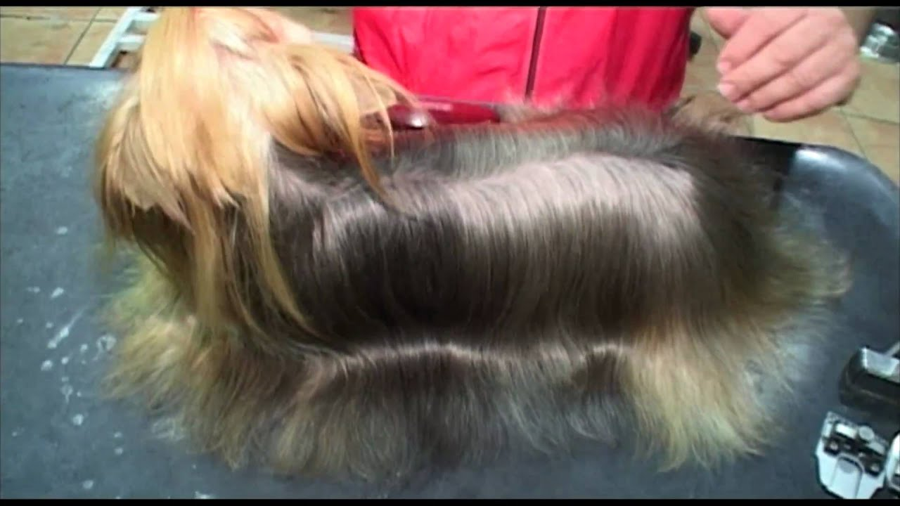 Dog Grooming Shampoos And Conditioners