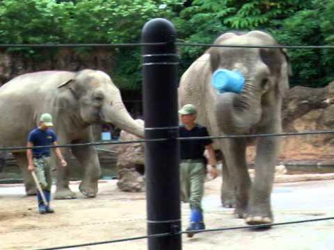 上野動物園の象さんさん