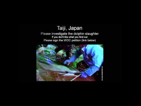 Taiji (Japan) Dolphin Slaughter