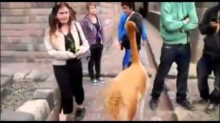 Home Funniest Videos Adult Funny Jokes Free Funny Videos Clips Funny Videos To Download Free