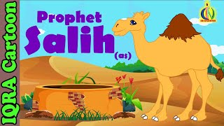 Video: Story of Prophet Salih - Iqra Cartoon