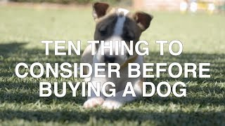TEN THINGS TO CONSIDER BEFORE BUYING A DOG