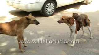 कुत्ते और बंदर की अजीब दोस्ती