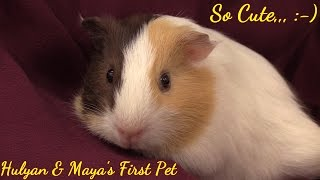 Family Toy Channel: Hulyan & Maya's New PET. 2 Month Old Guinea Pigs...