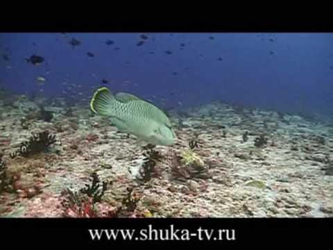 Мальдивы 3 Подводные съемки. Maldives underwater