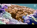 Spawning Super Coral To Help Save The Reefs | From The Lab