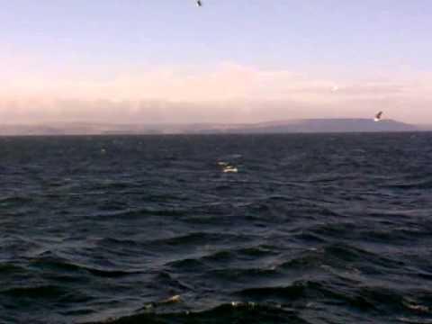 Humpback Whale Fluke Whitby 2012