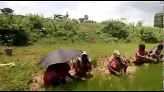 श्रमगीत : हिन्दुली : प्रकृति प्रेम : लोक संगीत : लोक साहित्य
