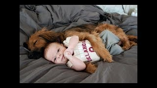 Most Adorable Dogs and Babies Living Together