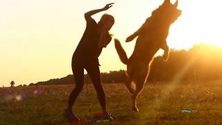 Dog Frisbee. Tricks. German Shepherd Eric.
