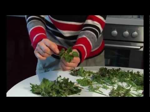 Wildkräuter Und Essbare Heilpflanzen: Brennnessel