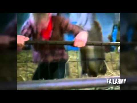 Young Solo Fight With Donkey, Clip Hot Funny video