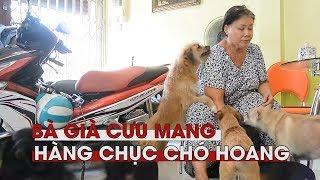 Người phụ nữ kỳ lạ cưu mang hàng chục con chó hoang giữa Sài Gòn