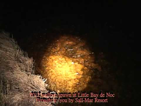 2012 walleye spawn-Little Bay de Noc