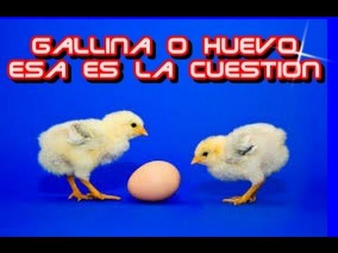 GALLINA O HUEVO ESA ES LA CUESTION
