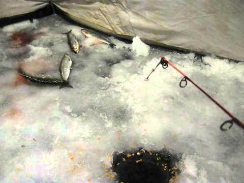 подледная ловля рипуса