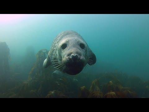 GoPro: Seal Belly Rub