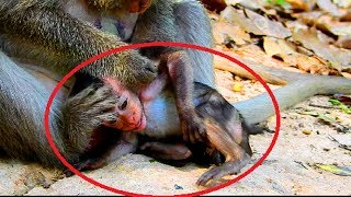 Ah ! Why monkey angry new baby like this? What wrong with baby ? See video very pity on baby #439