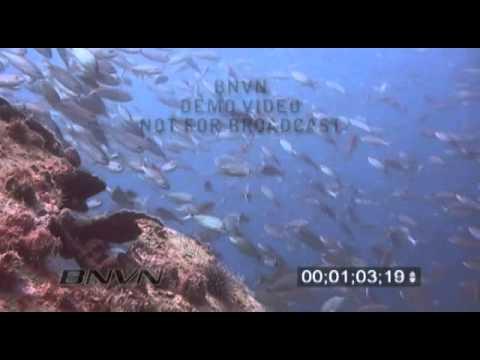 3/28/2004 Gulf Of Mexico, Bayronto Ship Wreck Video