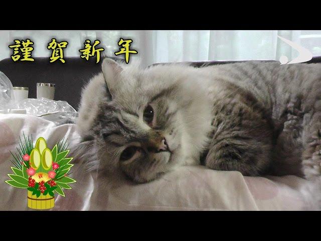 シベリア猫ミール君 第6弾 (平成29年1月13日公開)