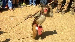 Bahu Bandar Ki - Bandar Bandariya Ka Khel | बहु बन्दर की | बन्दर बंदरिया का नाच | खेल