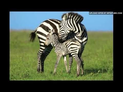 100 Folk Celsius - Zebrabál