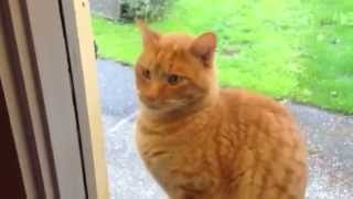 Cat Rings Doorbell