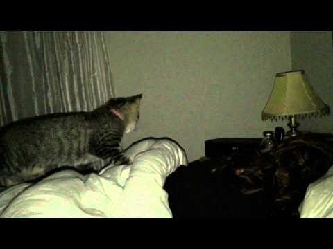 Pussy Massage video