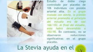 Los beneficios de la Stevia en la Hipertension