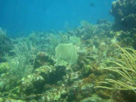 Scuba diving in Antigua at Coral Gardens