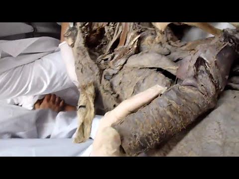 Laringe del equino-antomia 2-