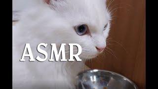 새로운 습식사료 ASMR 귀여운고양이동영상