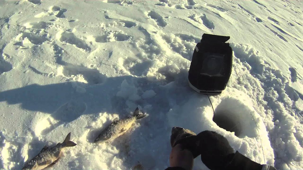 Ice fishing northern minnesota tullibee cisco 2014 youtube for Mn ice fishing show