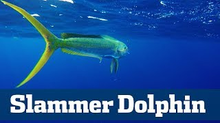 Slammer Dolphin Seminar  - Florida Sport Fishing TV