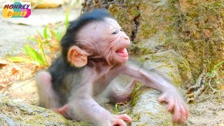 WOW! Valentin cry much coz see mom go far | Newborn cry too loud call mom back | Monkey Daily 2625
