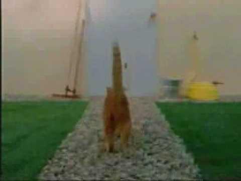 kucing jahat