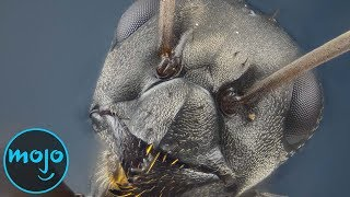 Top 10 Things That Look FREAKY Close Up