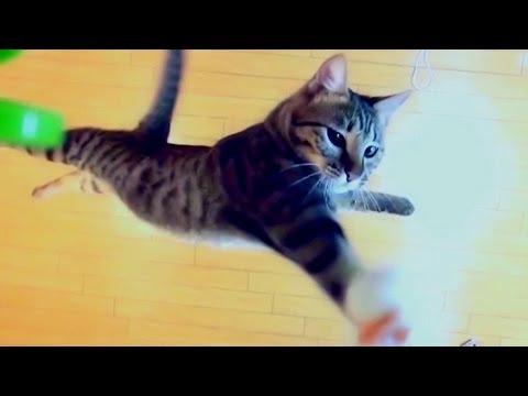 Gatos - ¿Cuanto puede llegar a saltar un gato?