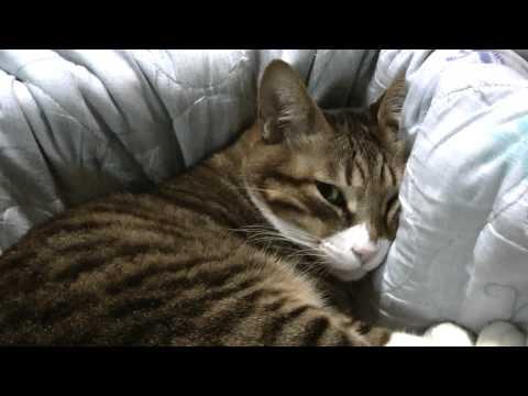 クシャミをすると怒る猫