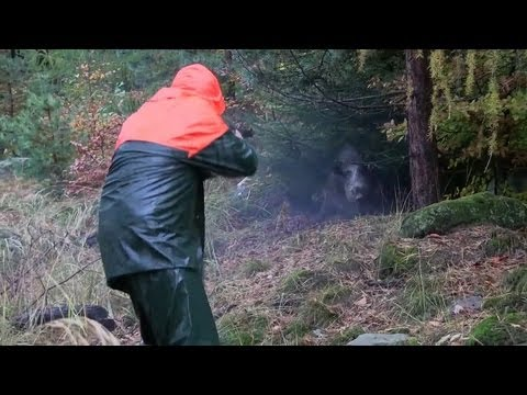 the-shooting-show-christmas-special-driven-wild-boar-in-bavaria.html